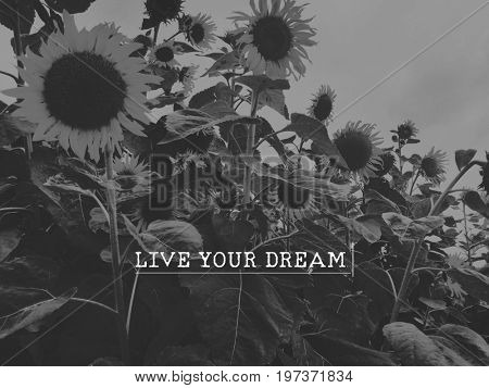 Live Your Dream Positive Enjoy