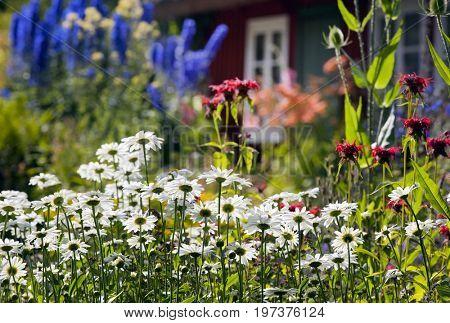 Meadow flowers, garden flowers, backyard of summer cottage