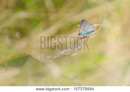 Autumn summer nature background. The concept of nature. Blurred image of a butterfly on the meadow grass. Abstract nature background. Warm nature banner design