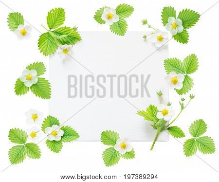 Wedding or family photo album frame with fresh white flowers and green leaves of strawberry isolated on white background; top view flat lay overhead view mocap
