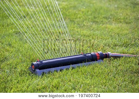Lawn Sprinkler In Action, Watering Grass