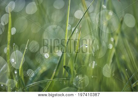 Dewy meadow in the early morning sunshine.