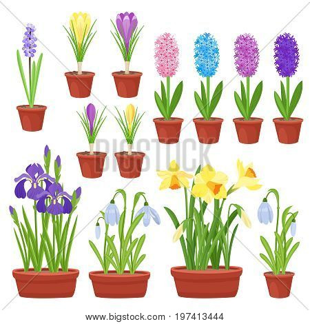 Spring flowers in flower pots. Irises, lilies of valley, tulips, narcissuses, crocuses, snowdrops and other primroses. Garden design icons isolated on white background. Cartoon style vector illustration