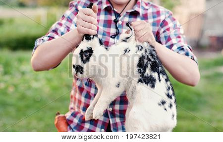 A boy in cowboy wear holding rabbit the scruff in farm. teenager holding a hare in the hands on the ranch at sunset