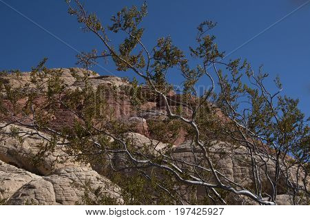 This is an image taken in the Red Rock mountains of Nevada