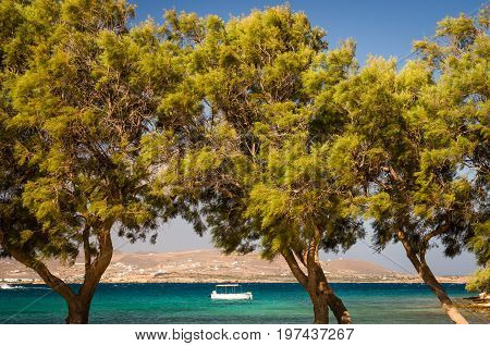 Agia Irini beach, Paros island, Greece. Beautiful Greek beach with palms in Cyclades Islands