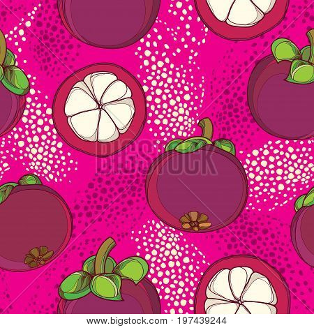 Vector seamless pattern with outline Purple Mangosteen or Garcinia mangosteen fruit on the pink background. Fruit pattern with Asian tropical plant in contour style for exotic summer design.