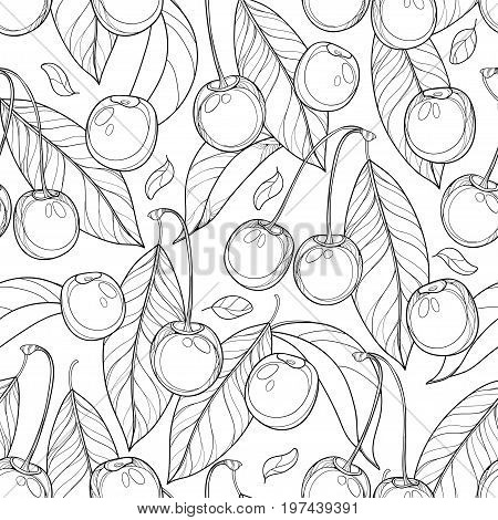Vector seamless pattern with outline ripe Cherry, berry and leaves in black on the white background. Floral pattern with cherry fruit in contour style for summer design and coloring book.