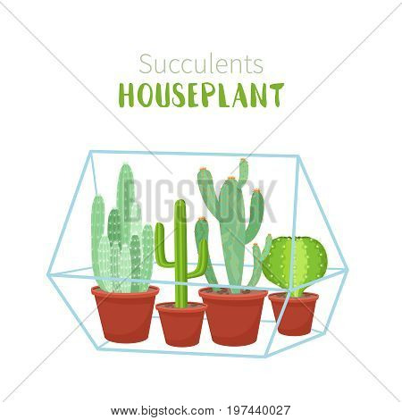 Geometric florarium with cactus and succulents set. Vector illustration isolated on white background.