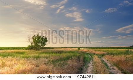 Road in field / bright spring evening time Photo Ukraine