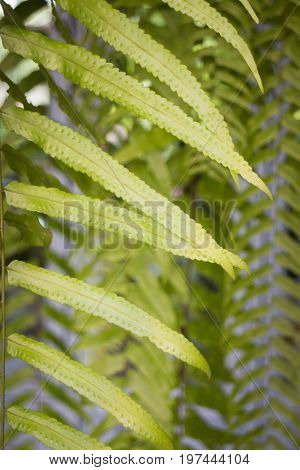 Green fern leaves in summer day stock photo