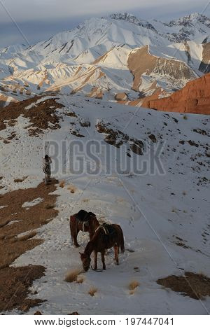 Hunter and horses in the winter in the mountains of Tien Shan.