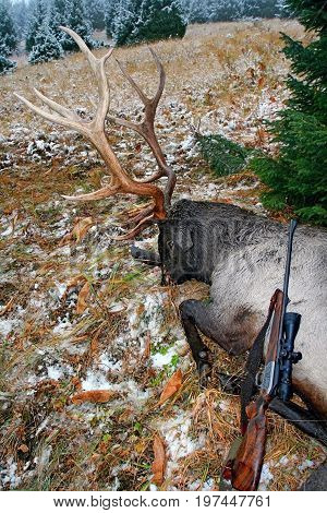 Trophy deer (Tien-Shan maral) after hunting in the autumn in the mountains