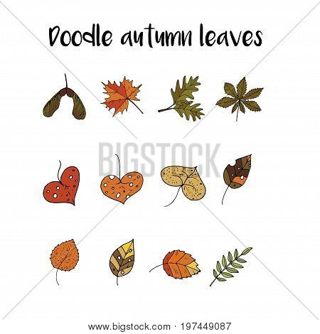 Handdrawn unique autumn leaves icons. Vector doodle illustrations. Perfect for logotypes, autumn cards, apparel design. poster