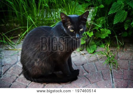 Severe street cat. Mistrustfully looking at the camera