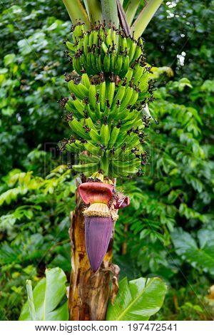 Hana Rainforest