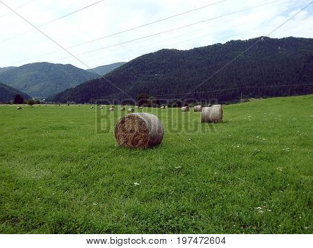 Round bales of straw in the meadow , Hay bales on a green meadow