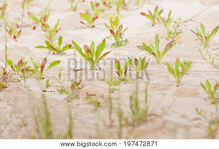 Summer. Sandy quarry. In small green plants against the background of sand and clay. Ukraine. Kiev region