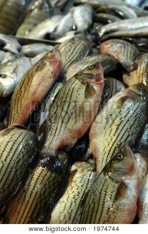 Fish At An Outdoor Market