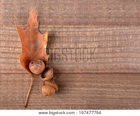 Oak leaf and acorns on a wood surface