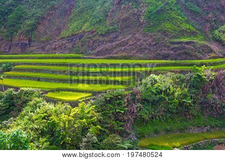 Mountain valley with rice fields in Philippines. Agricultural landscape surrounded by lush tropical vegetation.