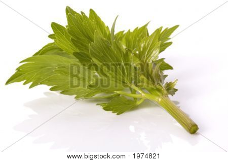fresh lovage isolated on the white background poster