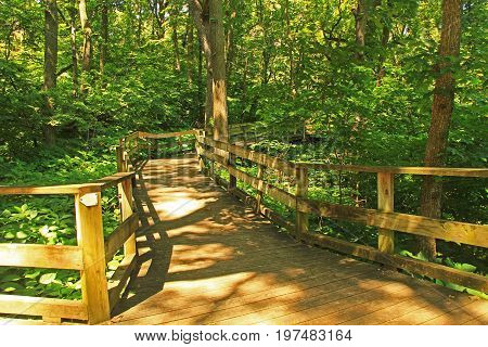 Peaceful boardwalk trail through lush trees in the Fontenelle Forest Nature Center in Bellevue, Nebraska near Omaha.