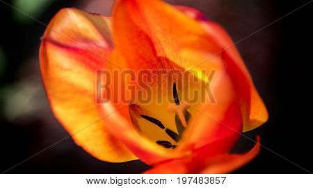 flowers, spring flowers, flowers concept, natural flowers, red flowers of the spring, yellow flowers of the spring, flowers of the spring, red and yellow flowers with blurry background, spring flower, flowers in the park, closeup flowers,