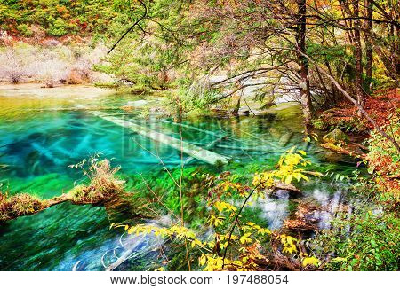 Clear Water Of Lake With Submerged Tree Trunks Among Fall Woods