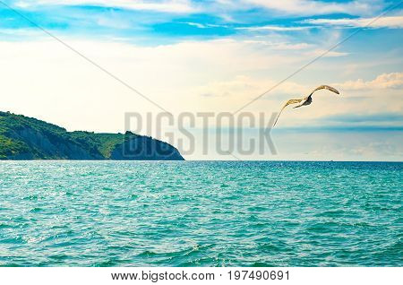 gull in the sky over the sea