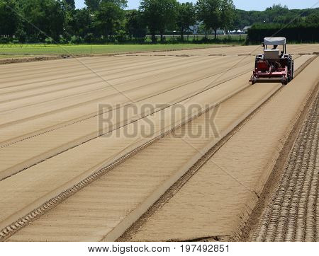 Field Cultivated With Lettuce And Tractor In The Po Valley In It