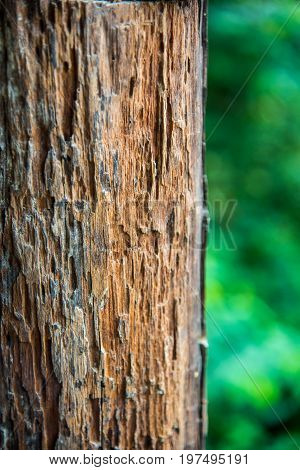 Texture of old wood lumber and trunk for background
