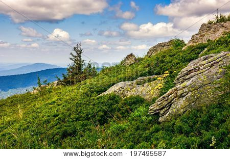 Spruce Tree On A Mountain Hill Side