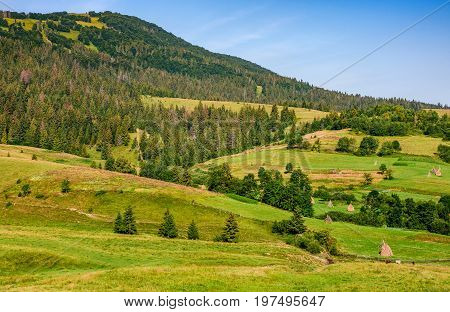 Rural Fields Near Forest On Hills Of Carpathians