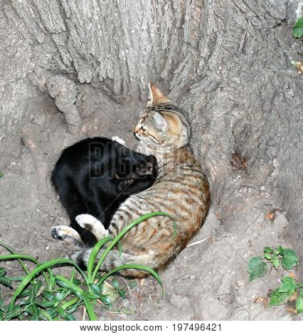 Two cats lie under a tree. International Homeless Animals Day