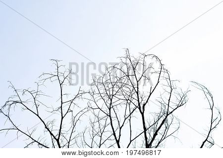 Dead Tree Sky Background