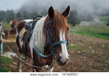 Horses graze in a meadow in the mountains, livestock.