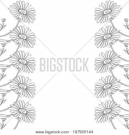 Arnica. Vintage medicinal herb sketch. Botanical plant illustration, isolated on white background, frame, decorative border.