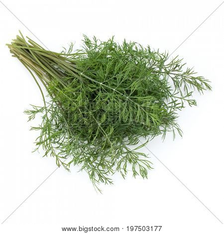 fresh green dill herb leaves bunch isolated on white background cutout