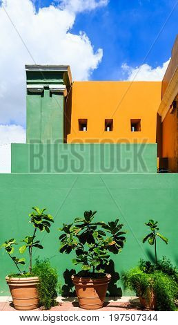 Plants Under Green Yellow and Blue in Curacao