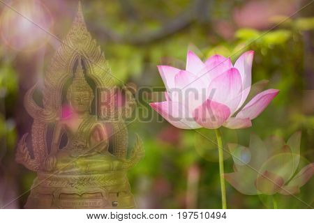 Three blossom lotus with Buddha statue double exposure, Culture of Thailand involved buddha