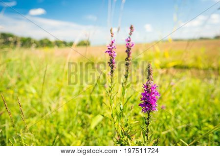 Lying in the grass and enjoying nature on a sunny day in the summer season.