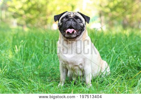 Cute dog sitting on green grass