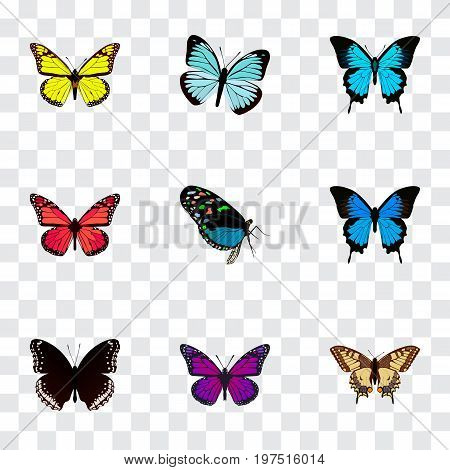 Realistic Common Blue, Papilio Ulysses, Archippus And Other Vector Elements