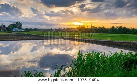 Sun rise with water reflection clouds in the young rice field and the road to Funeral pyre.