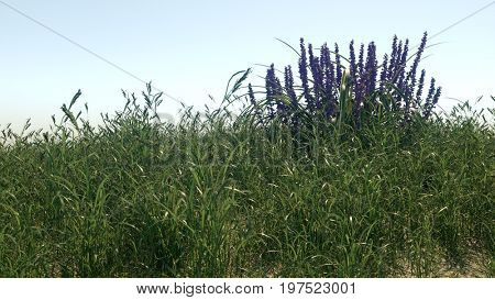 3d rendering of the grass scene