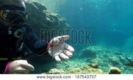 diver play with starfish