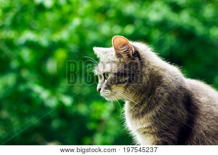 A cute gray cat in profile against a background of green foliage in the blur of her fur brightly highlights the sun