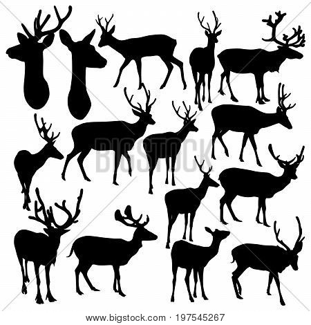 Collection of vector silhouettes of deer isolated on white background