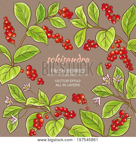 schisandra branches vector frame on color background
